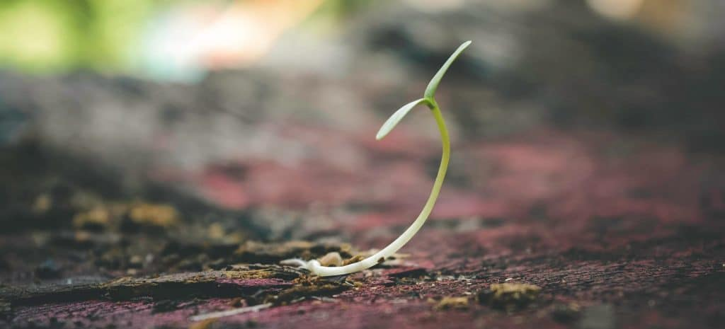 a single sprout emerging from the dirt